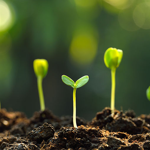 Sowing and Growing
